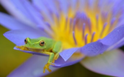 Frogs, Neural pathways, and EnneaMotion